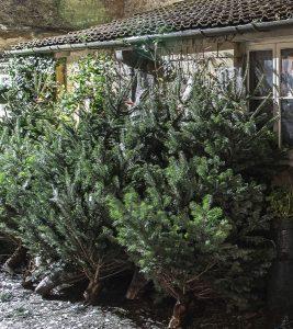 Bath-Christmas-trees